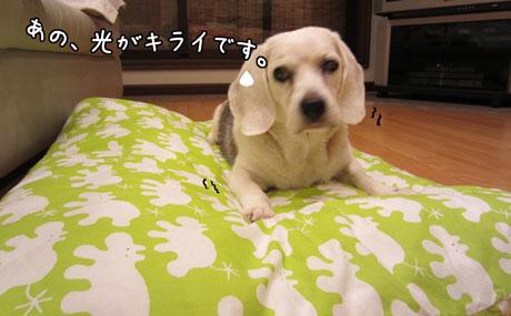 1_20111011181832.jpg