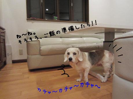 1_20111014182840.jpg