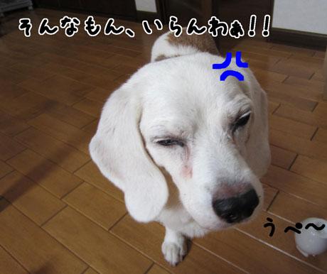 2_20110912151011.jpg