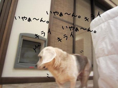 2_20111011181832.jpg