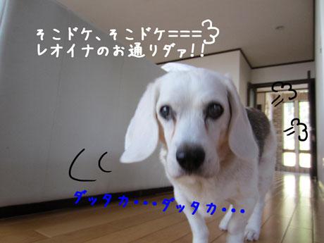 2_20111020142146.jpg