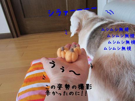 3_20110929160820.jpg