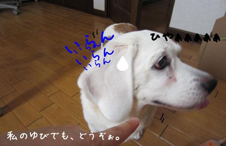 4_20110912151425.jpg