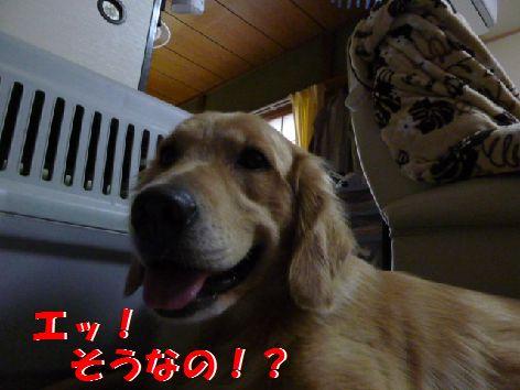 a_20110831062844.jpg