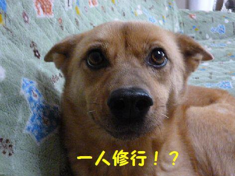 a_20120221071125.jpg