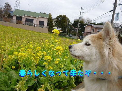 a_20120308071741.jpg