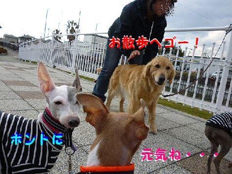 a_20120327072747.jpg
