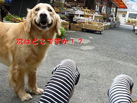 a_20120418070941.jpg