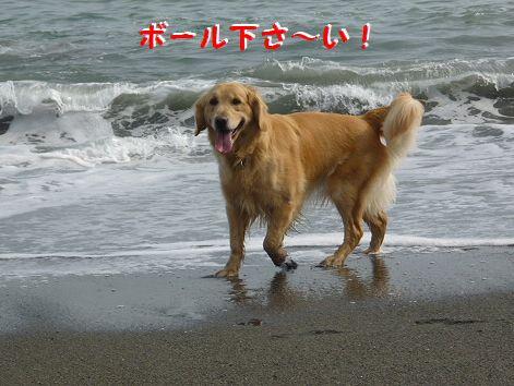 a_20120429101238.jpg