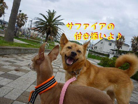 a_20120503094633.jpg