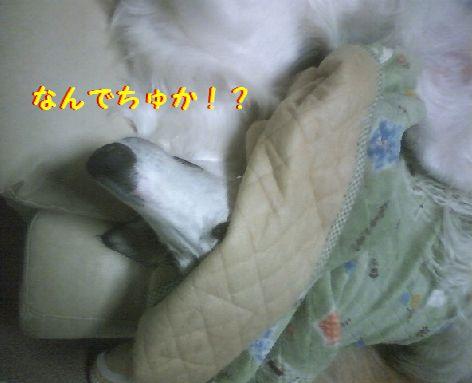 a_20130416075331.jpg