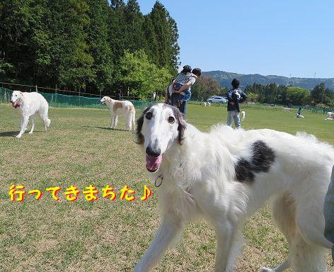 a_20130506104434.jpg