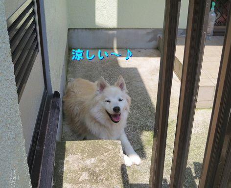a_20130619074840.jpg