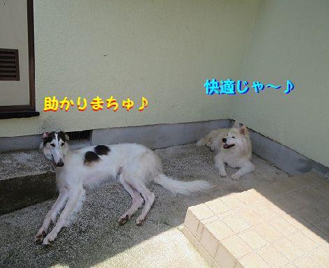 a_20130704074018.jpg