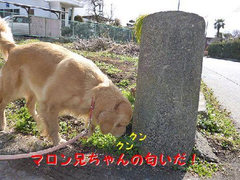 b_20120228070614.jpg