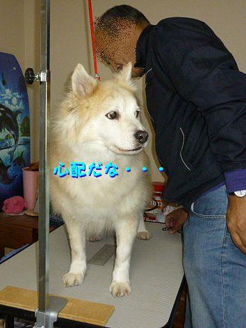 b_20120325093644.jpg