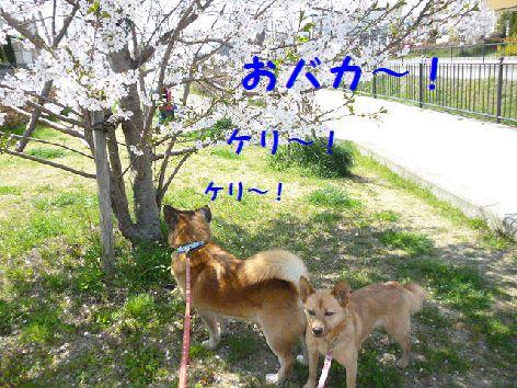 b_20120413072115.jpg