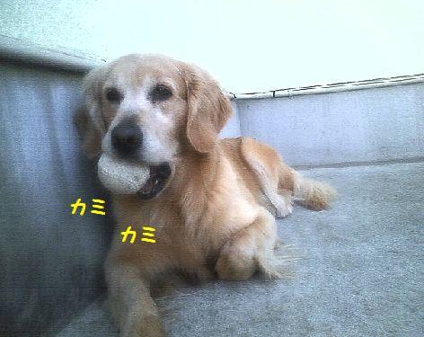 b_20130414082012.jpg