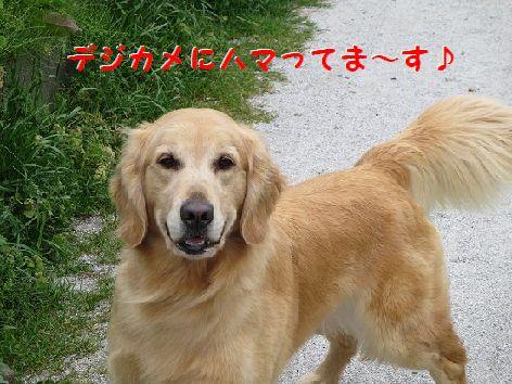 b_20130426075020.jpg