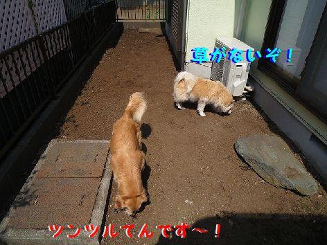 b_20130429102819.jpg