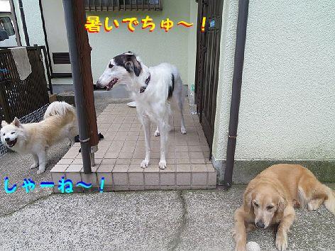 b_20130605074425.jpg