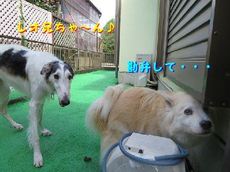 b_20130628074708.jpg
