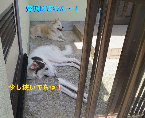 b_20130704074017.jpg