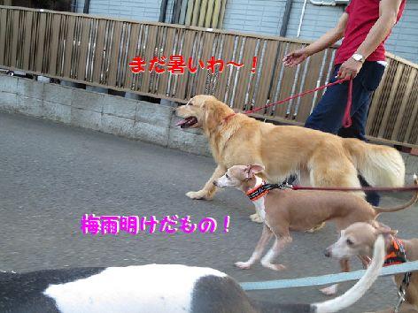 b_20130708075141.jpg
