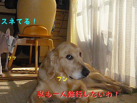 c_20120221071124.jpg