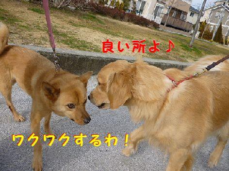 c_20120226084729.jpg