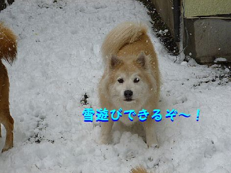 c_20120301070503.jpg