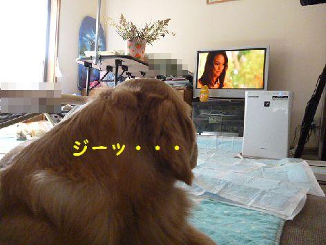 c_20120407145252.jpg