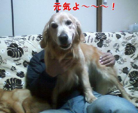 c_20130325074657.jpg