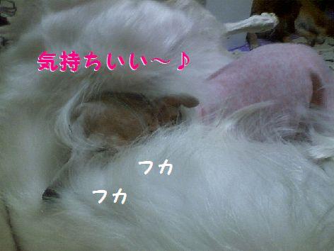 c_20130329191343.jpg