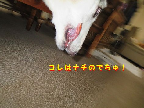 c_20130422075214.jpg