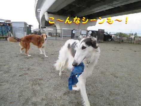 c_20130426075020.jpg