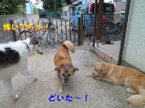 c_20130605074424.jpg