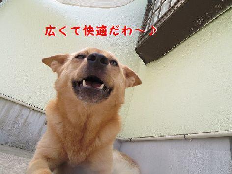 c_20130704074017.jpg