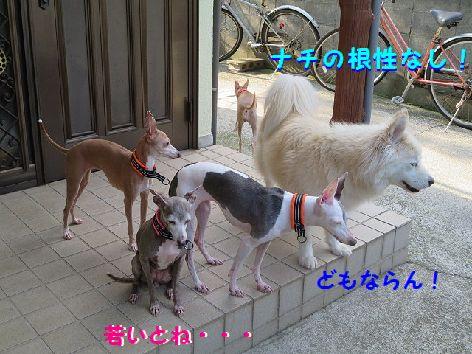 c_20130709075349.jpg