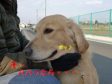 d_20120209070835.jpg