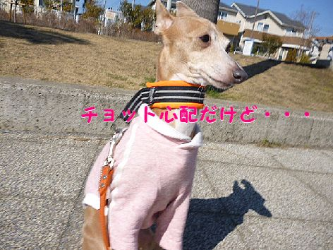 d_20120221071124.jpg