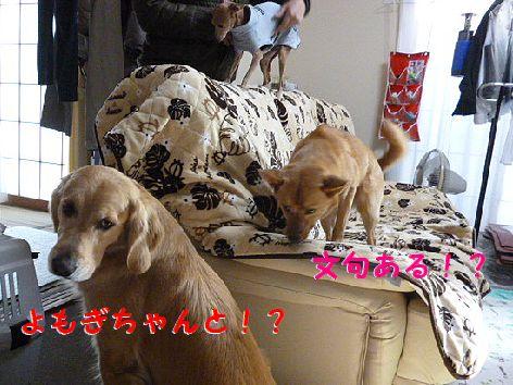 d_20120224072311.jpg