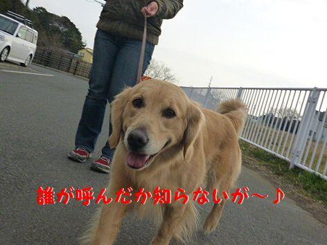 d_20120225094250.jpg