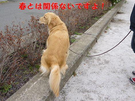 d_20120308071741.jpg
