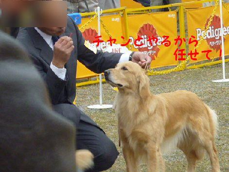 d_20120319103437.jpg
