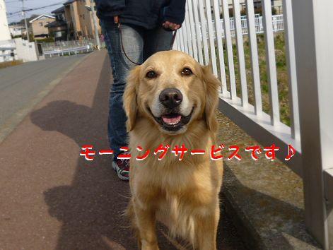 d_20120328070814.jpg