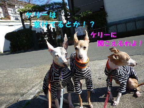 d_20120406072008.jpg