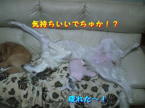 d_20130321075426.jpg