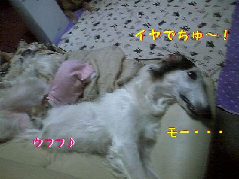 d_20130329191342.jpg