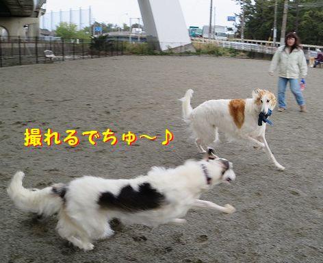 d_20130426075019.jpg